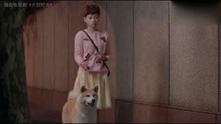 【白篷展】电视明星犬 《大好时光》宠界女一号草莓抢先看