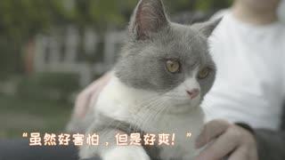 萌猫课堂_20180419_如何用手机拍摄高清猫片