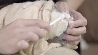 萌猫课堂_20180415_如何给猫刷牙