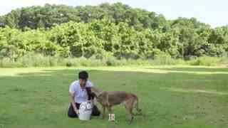 狗狗GO_20180425_如何与狗狗一起踢足球
