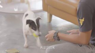 狗狗GO_20180418_让狗狗学会叼东西