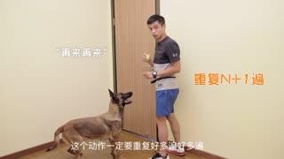 如何训练你的狗狗为你开门