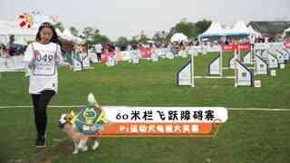 【白篷展】60米栏飞跃障碍赛