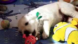 可爱的小狗长大
