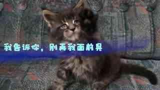 可爱的小猫滚打