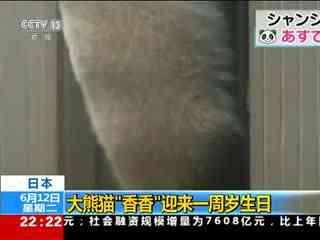 """日本:大熊猫""""香香""""迎来一周岁生日"""