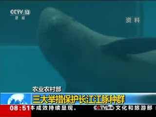 农业农村部:三大举措保护长江江豚种群