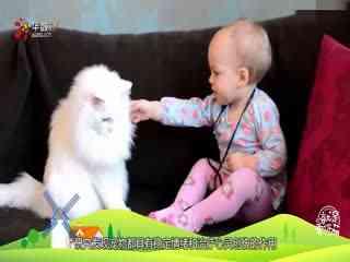 """【就是要你萌】天生拥有""""偶像""""基因的小萌宠们"""