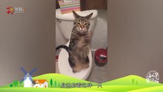 【就是要你萌】 养只猫吧,猫治百病