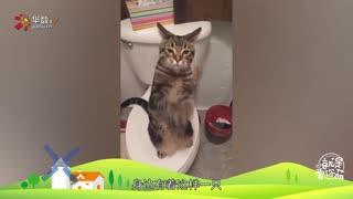 养只猫吧,猫治百病