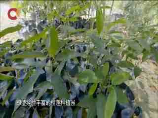 中国故事_20180923_中国故事(09月23日)