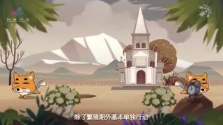 摩登大自然第一季_20181025_藏狐