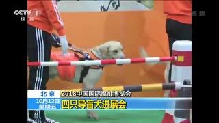 2018中国国际福祉博览会 四只导盲犬进展会