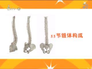 健康起义_20181022_你的脊柱够健康吗?