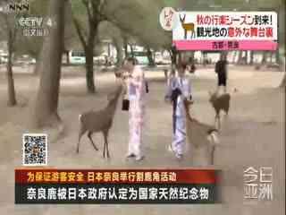 为保证游客安全 日本奈良举行割鹿角活动