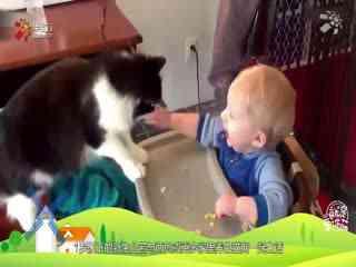 【就是要你萌】萌宠和宝宝在一起的画风居然这么甜