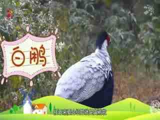 【就是要你萌】你知道红色爱情鸟、白昼鸟、来去如风之鸟吗?