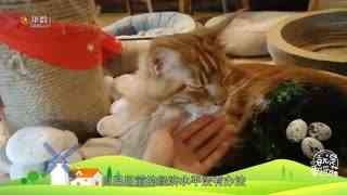 【就是要你萌】别担心,会有猫的