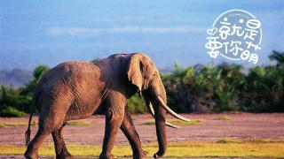 【就是要你萌】大象:对于鼻子,我们是认真的