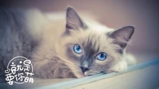 【就是要你萌】当猫咪患上抑郁症