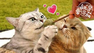 就是要你萌_20191219_猫咪为什么喜欢猫薄荷?