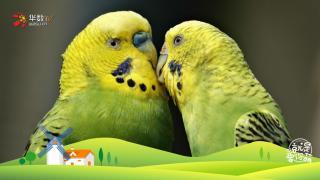 【就是要你萌】单口相声表演艺术家——鹦鹉