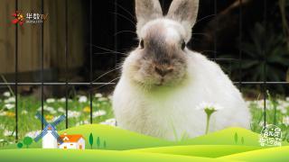 【就是要你萌】请问,您要来点兔子吗