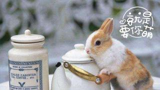 就是要你萌_20190321_请问,您要来点兔子吗?
