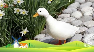 【就是要你萌】天价柯尔鸭:每天都要幸福鸭