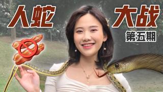 密子君_20190510_野外捉蛇,站在食物链顶端的女人破胆挑战全蛇宴!