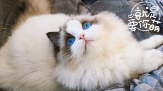 【就是要你萌】来世,做只猫