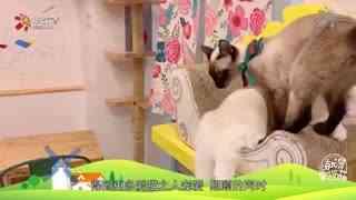 【就是要你萌】一间猫咖,融化整个寒冬