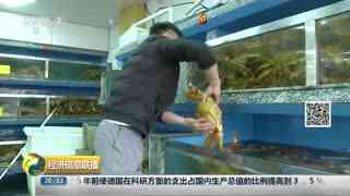 俄渔船直供上海 昂贵帝王蟹现降价势头