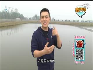 做给你看_20190523_金湖小龙虾