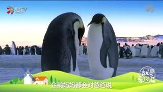 【就是要你萌】企鹅(下):痴情企鹅的往后余生