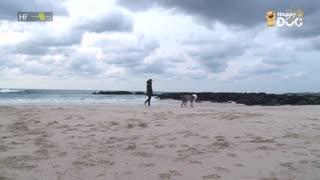 治愈234:英国古代牧羊犬
