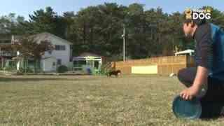 玩耍03:比利时牧羊犬、玛利诺犬