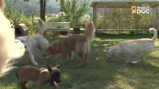 玩耍68:比利时马利诺牧羊犬