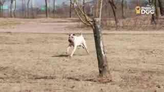 玩耍200:顺毛寻回犬黄金猎犬