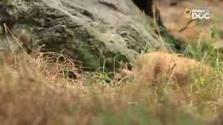 玩耍164:珍岛犬