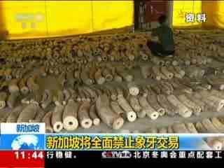 新加坡将全面禁止象牙交易