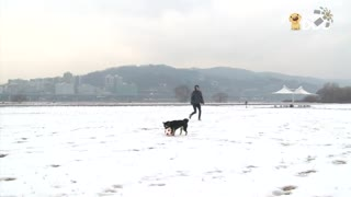 玩耍59:柴犬