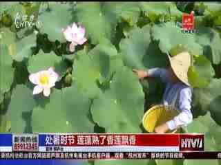 """处暑时节农事忙 """"种一季收两茬""""的再生稻迎丰收"""