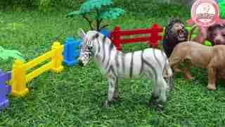 张猫猫与动物玩具乐园 第31集