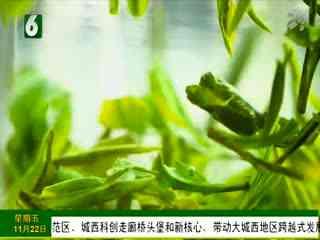1818黄金屋_20191122_自在假日 欢乐启程 杭州龙湖滨江天街假日酒店开业