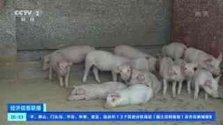 四川:猪肉价格回落 销售回温