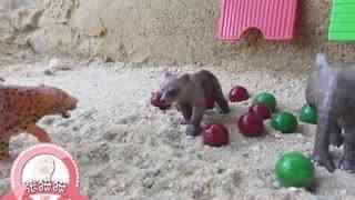 张猫猫与动物玩具乐园 第35集