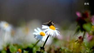 李育强:蜜蜂文化的传播者