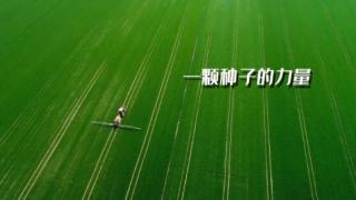 王义波:一颗种子的力量