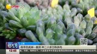 上海:程序员卖掉一套房 种二十多万株多肉